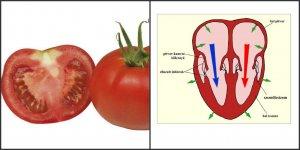paradicsomszív